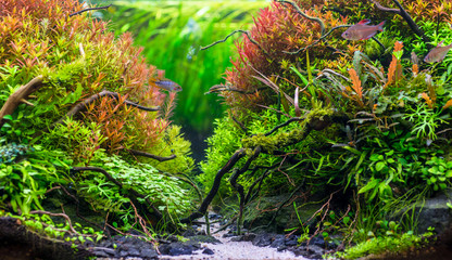 Beautiful nature decoration planted fish tank in freshwater aquarium with fishes