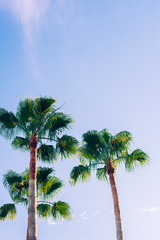 Tropical palm trees in a corner with blue sky background