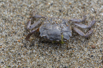 Decay crab on sand.