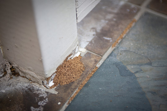 Proof of Termite Infestation