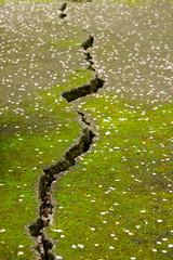 熊本地震後の地割れ