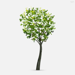 Tree isolated on white background with soft shadow. Use for landscape design, architectural decorative. Park and outdoor object idea for natural article both on print and website. Vector.