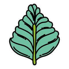 color natural leaf tropital botany style
