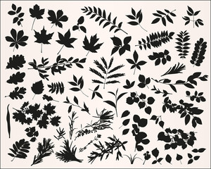 Set of vector plant silhouettes on white background