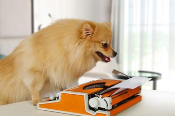 Funny Pomeranian dog typing on a vintage typewriter