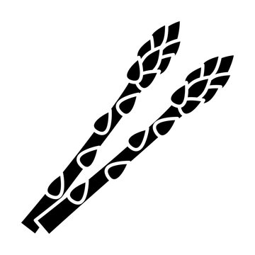 Two garden asparagus or sparrow grass flat vector icon for vegetable apps and websites