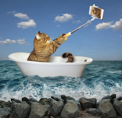 The cat is sitting into the white tub and making a selfie in the sea.