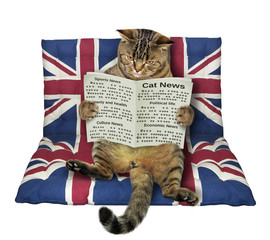 The cat with a newspaper sits on a air bed. White background.