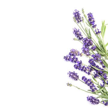 Lavender flowers white background Floral border