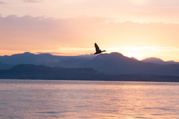 Sunrise on the lake. Panorama of the early morning. mountain in silhouettes and the rays of the rising sun. Birds flying in the sky. Sunrise on Lake Garda, Italy