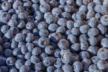 Lots of Fresh Delicious Blueberries