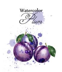 Plum watercolor fruits Vector. Sweet label template designs