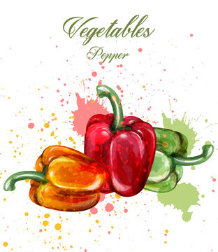 Peppers watercolor Vector. Juicy colorful vegetables illustrations