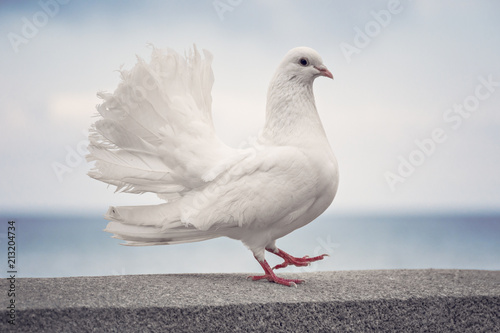 A Symbol Of Peace White Dove On The Waterfront Stock Photo And