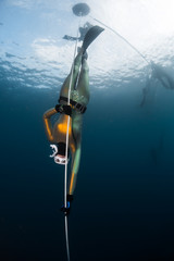 Wall Mural - Woman freediver in the golden wetsuit descends along the rope in an open sea