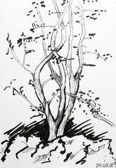 Tree sketch with black pen