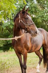 Horse full body shot