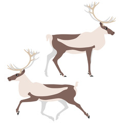 Vector illustration of standing and running caribou isolated on white background