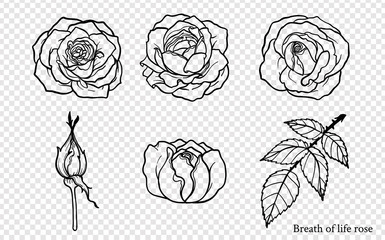 Rose vector set by hand drawing.Beautiful flower on white background.Rose art highly detailed in line art style.Breath of life rose for wallpaper