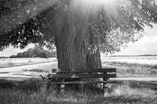 Bank am Lichtbaum