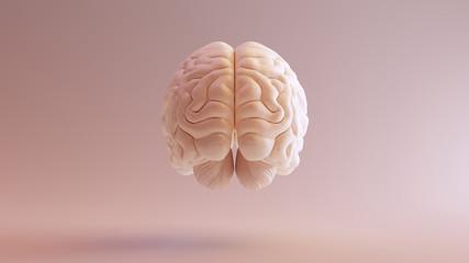 Human brain Anatomical Model 3d illustration Fotobehang