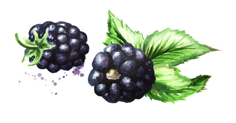 Two ripe blackberries with green leaves. Watercolor hand drawn illustration, isolated on white background
