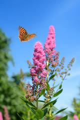 Schmetterling 488