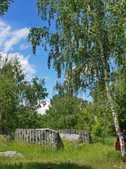 Stone ruins in the middle of a green forest glade with tall young birches
