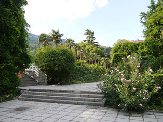 Fototapeta concrete alley to the stairs in the park with a blooming alendron in the south. A place for walks and rest