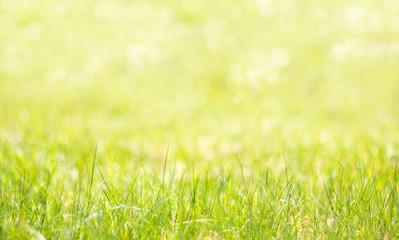 Wiosenne tło z trawą na pierwszym planie. Kolorowe naturalne tło przechodzące w rozmycie.