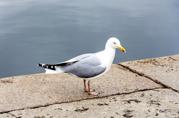 A seagull is standing on a pier on a summer day against the blue sea.