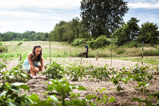 Girl planting while brother working in background at vegetable garden