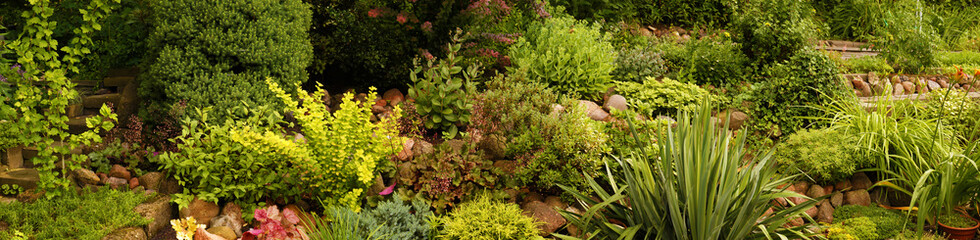 Panorama of the garden with various plants, rock garden.