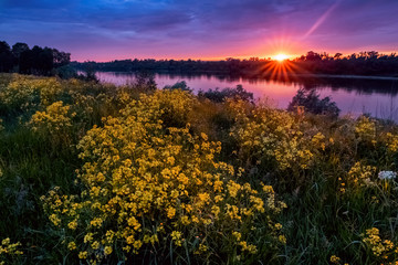 Summer sunset landscape with a river and yellow flowers