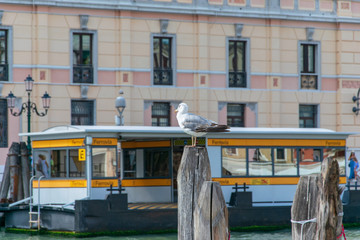 Seagull standing on a log in Venice Italy