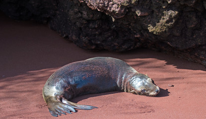 Galapagos Islands Wildlife and Landscapes