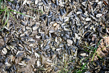 Sunflower seed hulls on ground