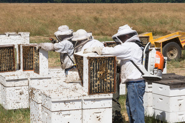 Commercial Beekeepers