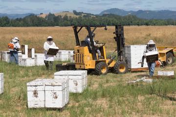 Bee Workers