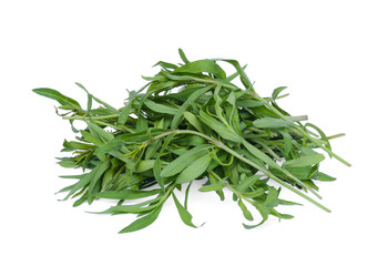 french tarragon isolated on white background