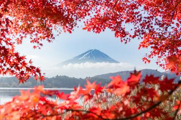 Fototapeten Violett rot 富士山・河口湖・もみじ・秋