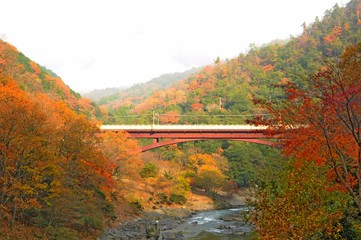Colorful Leaves and Maple Trees in Autumn in Kyoto, Japan