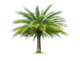 Palm tree isolated on white background, tropical trees isolated used for design, with clipping path.