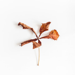 Autumn leaf on white background. Flat lay, top view, square