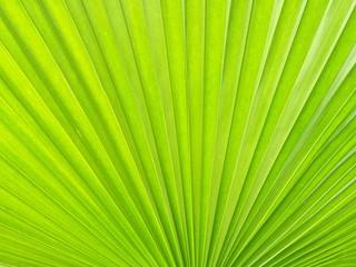 Stripes of palm leaf
