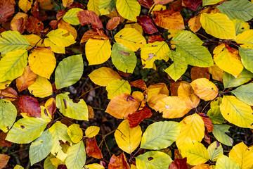 Herbstlaub Nahaufnahme Background