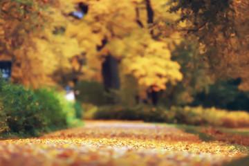 yellow autumn forest landscape / beautiful trees with yellow leaves in the forest, landscape October autumn, seasonal landscape