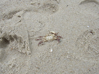 A dead crab washed up on the beach