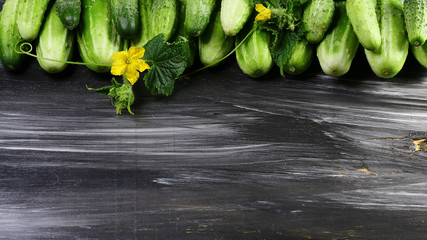 Fresh green cucumbers. Flower cucumber. Isolated on dark background. Top view. Copy space