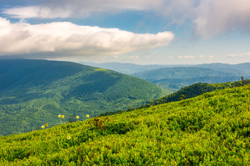 beautiful summer landscape. green grassy meadow on a hillside on top of mountain ridge under cloudy blue sky